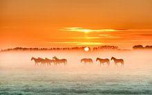 Paarden collectie voorbeeld