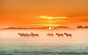 Horses in the mist  1 van Marinus de Keijzer