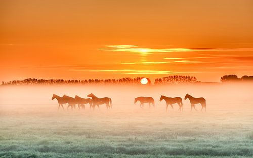 Horses in the mist  1