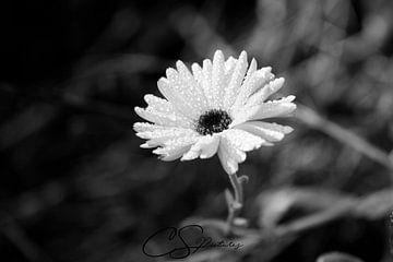 Blume im Herbst van Christina Sudbrock