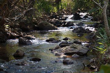 Rivier / River, Mlilwane, Swaziland, Zuid-Afrika van Maurits Bredius