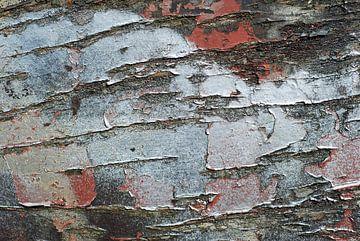 Oud hout, verweerd, gevonden langs de gaasperplas in Amsterdam van Anne Hana
