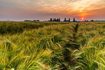 Korenveld tijdens zonsondergang, Vlaamse Ardennen van Easycopters