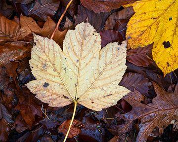 Herfstblad met condens druppeltjes van Rick Kloekke
