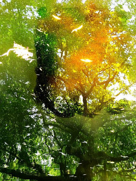 Tree Magic 192-A van MoArt (Maurice Heuts)