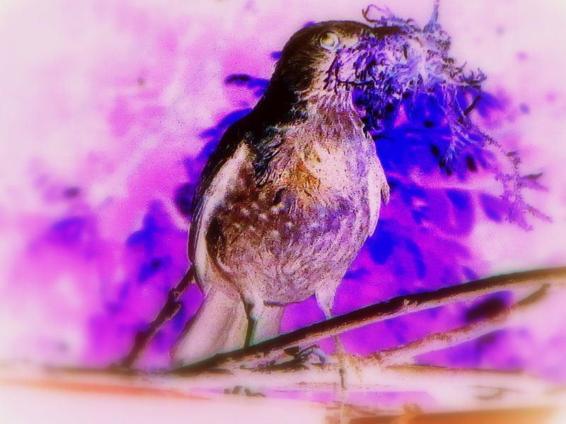 Purple Dove Phantasy von Nicky`s Prints