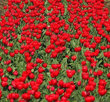 Detail Tulpenveld van Peter Heins