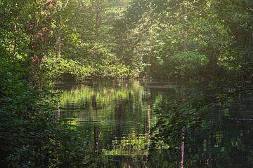 Paradiesischer Ort im Wald von Anouschka Hendriks