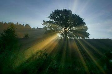 De opkomende zon schijnt door de boom van Dennis Bresser