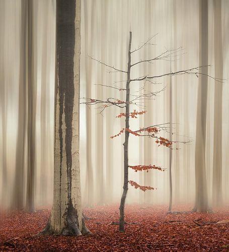 One tree life - The elegant one