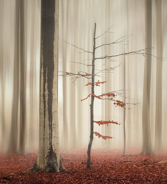 One tree life - The elegant one van Rob Visser