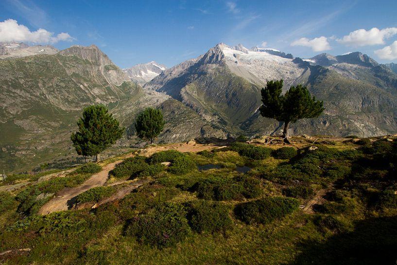 Het prachtige gebergte in Zwitserland ( bettmeralp ) van Paul Wendels