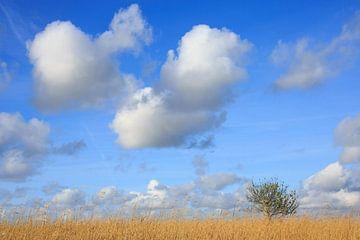Savanne in Nederland van Anja Brouwer Fotografie