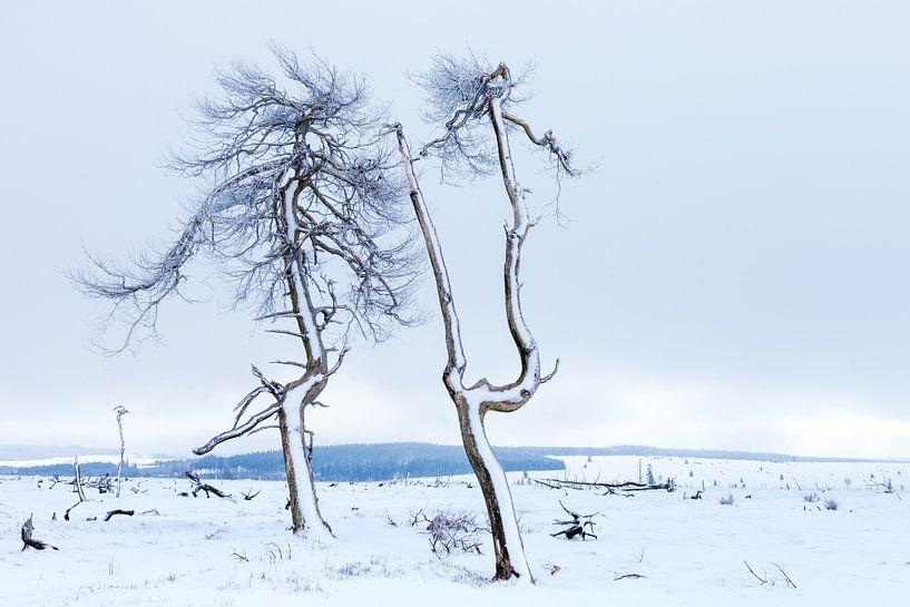 Winter in Belgium van Wim van D