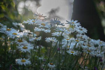 Blumen Teil 170