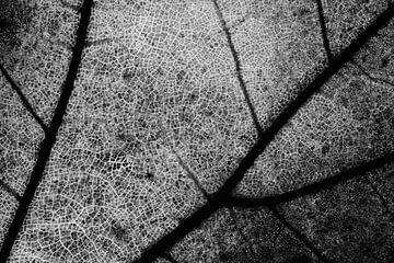 straten, Matteo Chiarello van 1x