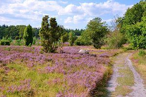 Blooming Moorland