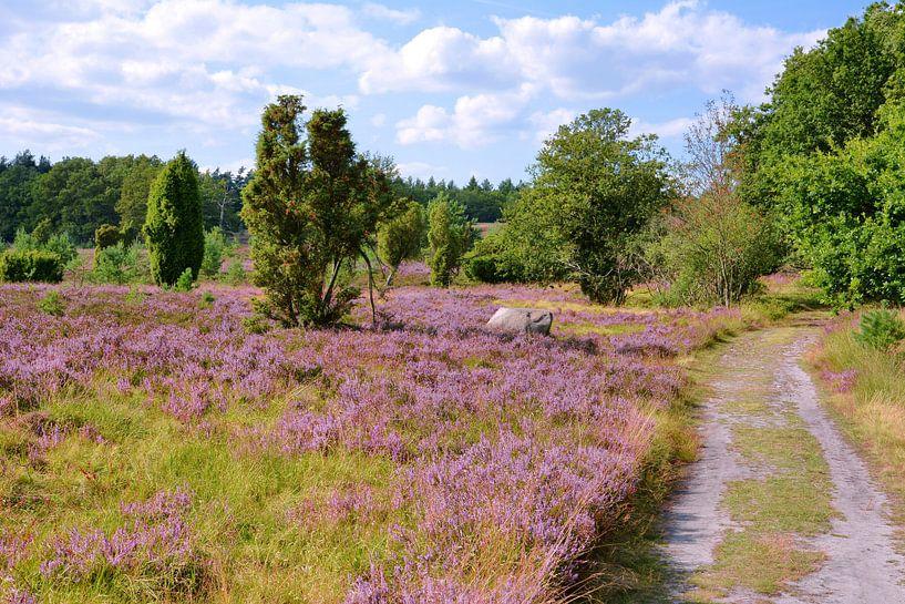 Blooming Moorland van Gisela Scheffbuch