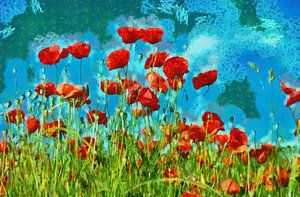 Klaprozen in  veld met blauwe hemel