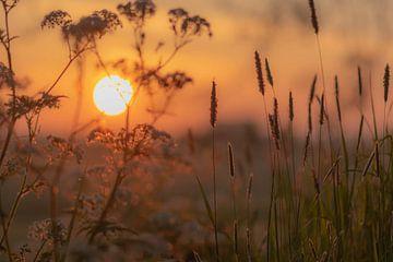 sonniger Frühlingsmorgen von Tania Perneel