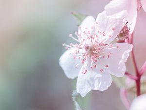 Macro de la fleur rose blanche en gros plan