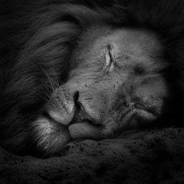 Fais de beaux rêves sur Ruud Peters