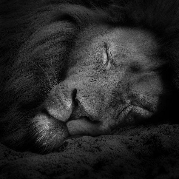 Sweet dreams van Ruud Peters