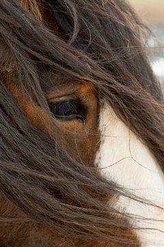 Paard in winters guur weer van Jani Moerlands