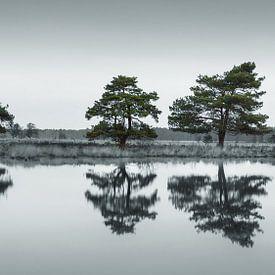 Der Nationalpark Dwingelderveld von Marga Vroom