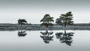 Het Nationaal Park Dwingelderveld