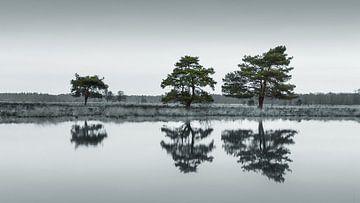 Het Nationaal Park Dwingelderveld van Marga Vroom
