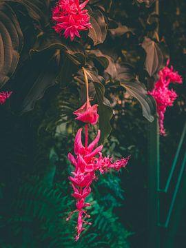 Tropische bloem in bloei van Mick van Hesteren