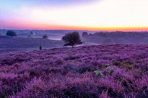 Purple Morning van Marcel Moonen