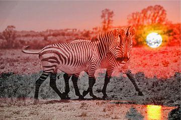 Zebra Liebe bei Sonnenuntergang thula-art von Barbara Fraatz