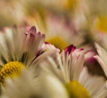 Verschwommene Gänseblümchen von J..M de Jong-Jansen
