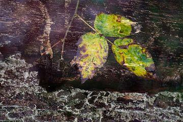 Nature-Art 002 van Henk Elshout