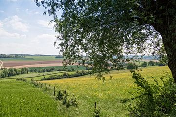 Niederländische hügelige Landschaft von Miranda van Hulst