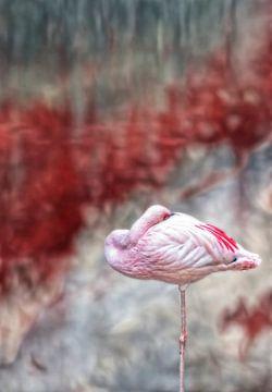 Flamingo von Marcel van Balken