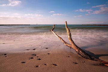 Baumstamm an der Küste der Ostsee bei Nienhagen von Rico Ködder