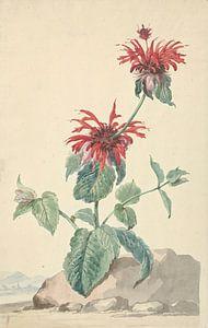 Eine rote Bergamotte in einer Landschaft, Aert Schouman