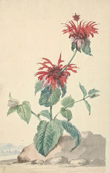 Eine rote Bergamotte in einer Landschaft, Aert Schouman von Meesterlijcke Meesters