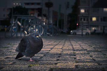 Pidgeon's night out von Elianne van Turennout