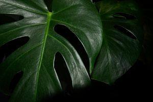 Monstera Deliciosa close-up plant van Jolanda Berbee