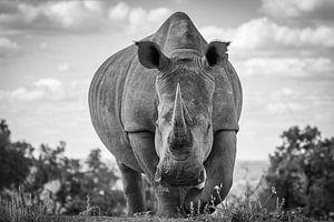 Portret van een neushoorn, kikkerperspectief. van
