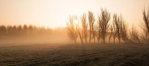 Misty Morning at Leidschendam - 1