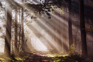 Lumière du jour sur Tvurk Photography