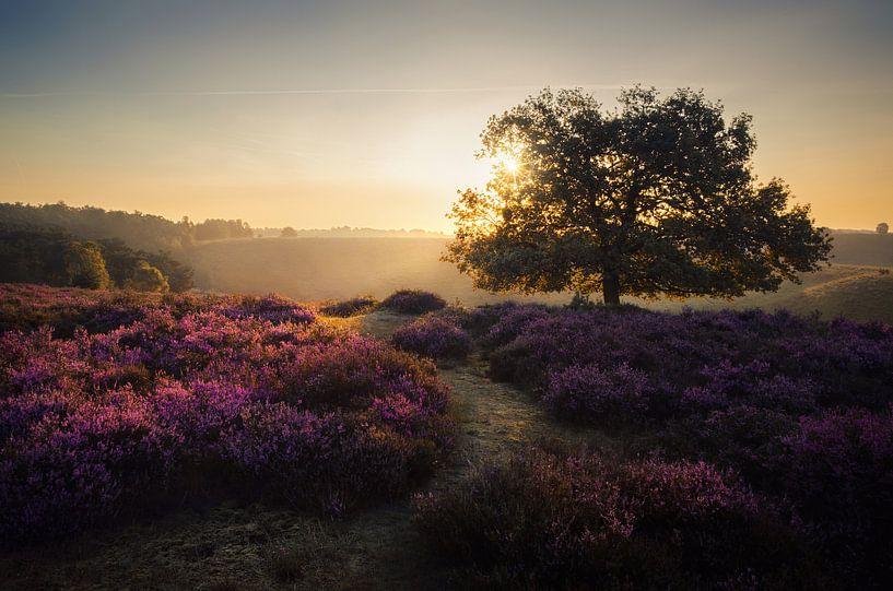 Purple dream van Rob Visser
