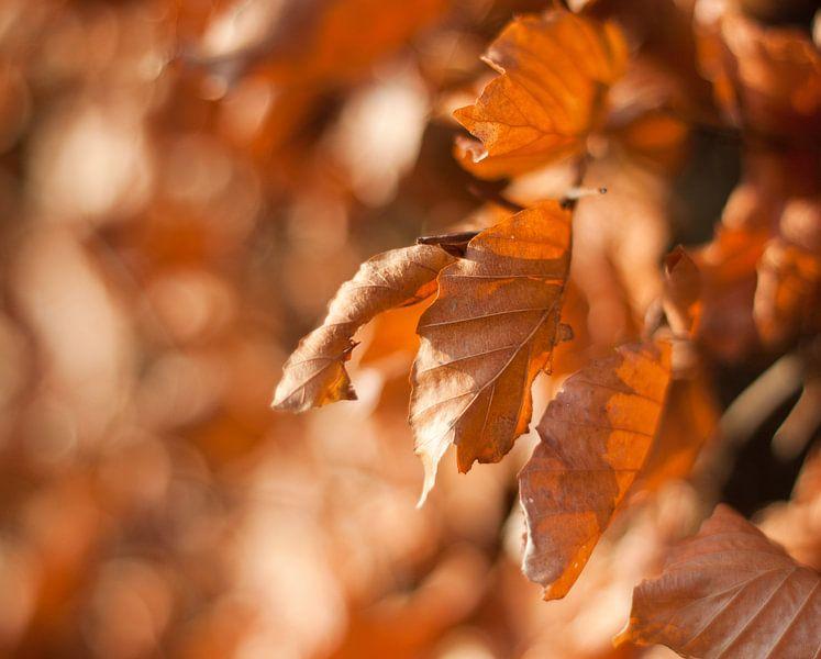 Autumn leaves van Marco de Groot