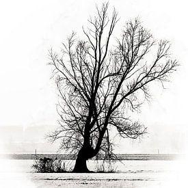 Het leven en de dood in een eenzame boom van Art by Jeronimo
