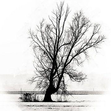 Het leven en de dood in een eenzame boom van